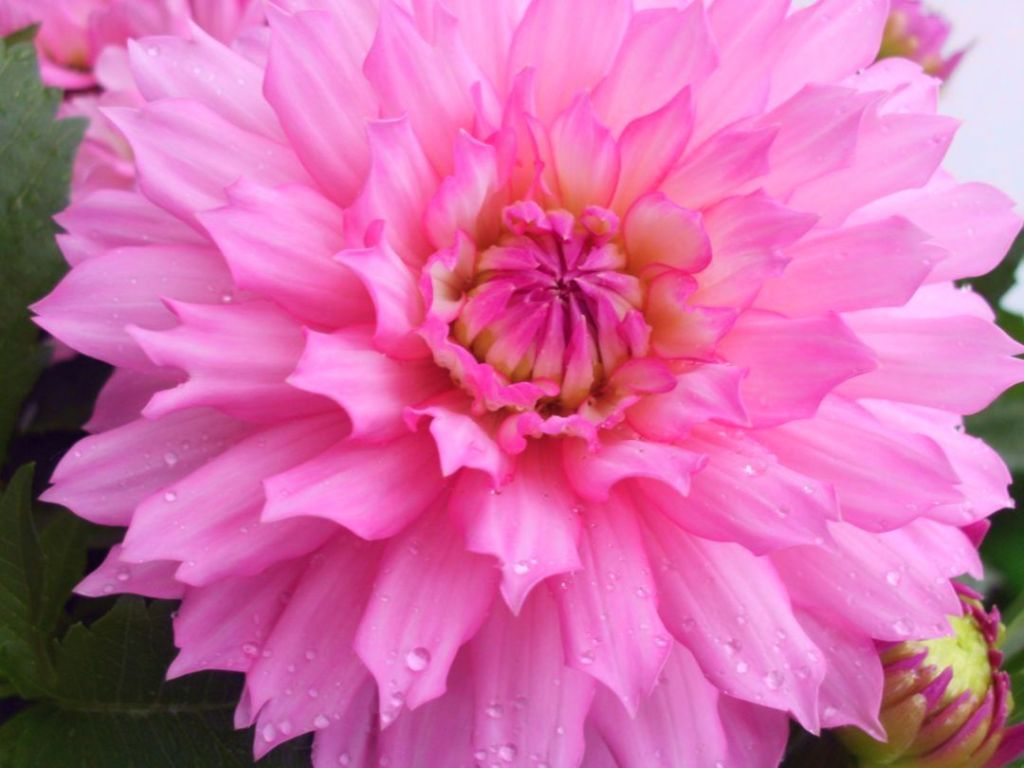 A Pink Flower For Birthday Diary Of Dennis