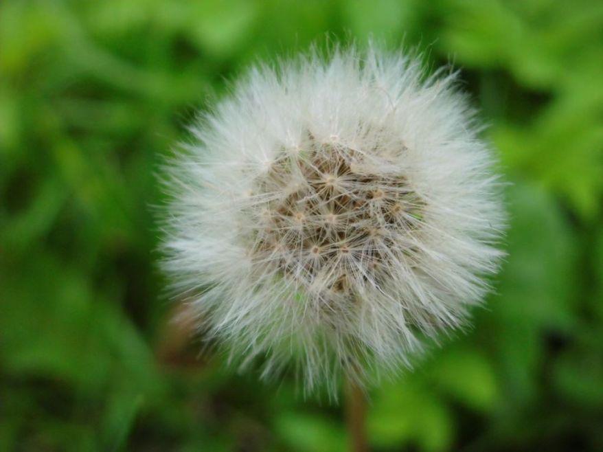 blowball1