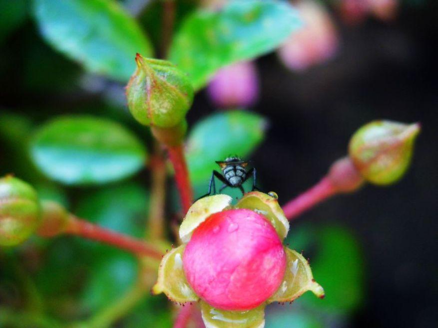 insectDSCI0101