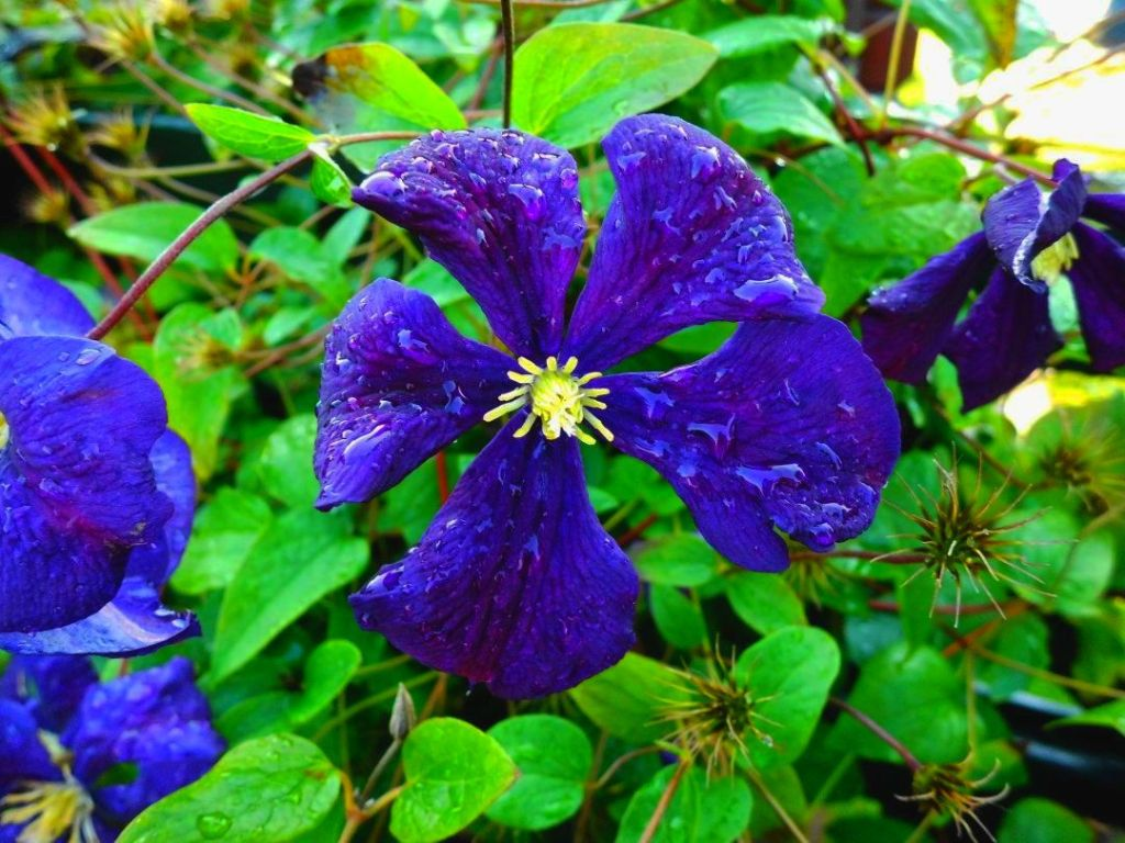 Raindrops On A Purple Flower Diary Of Dennis