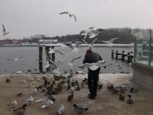 birdattack3_zps9f48faf4