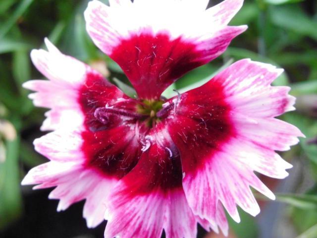 weeklyphotoflowerchallengeDSCI0016_zpsacd32aea