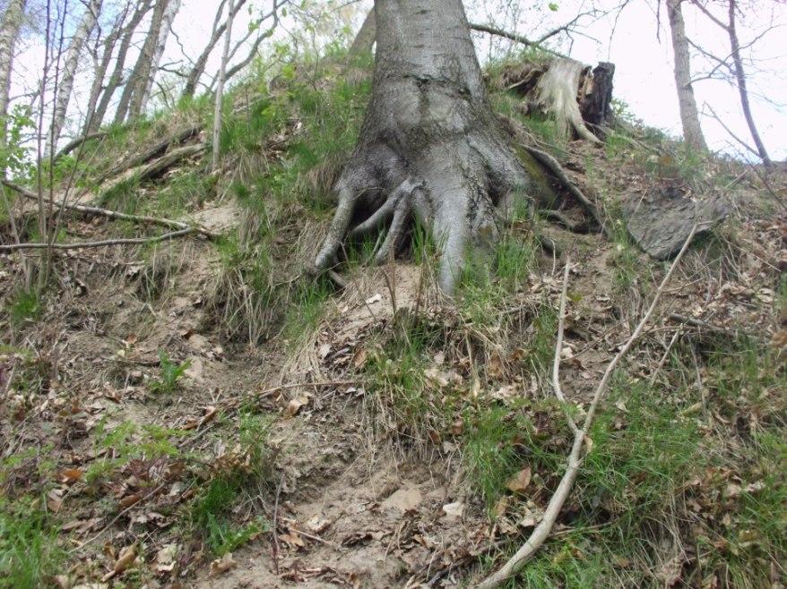 treestumpnearsalem