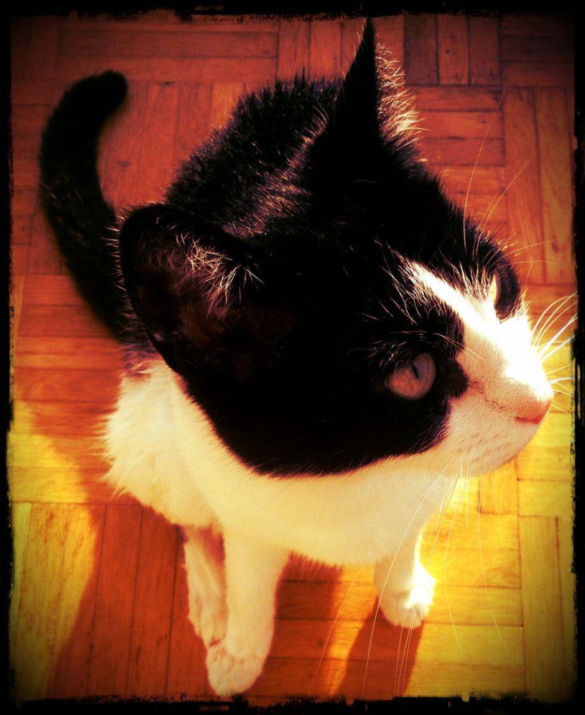 A Photo of my Cat