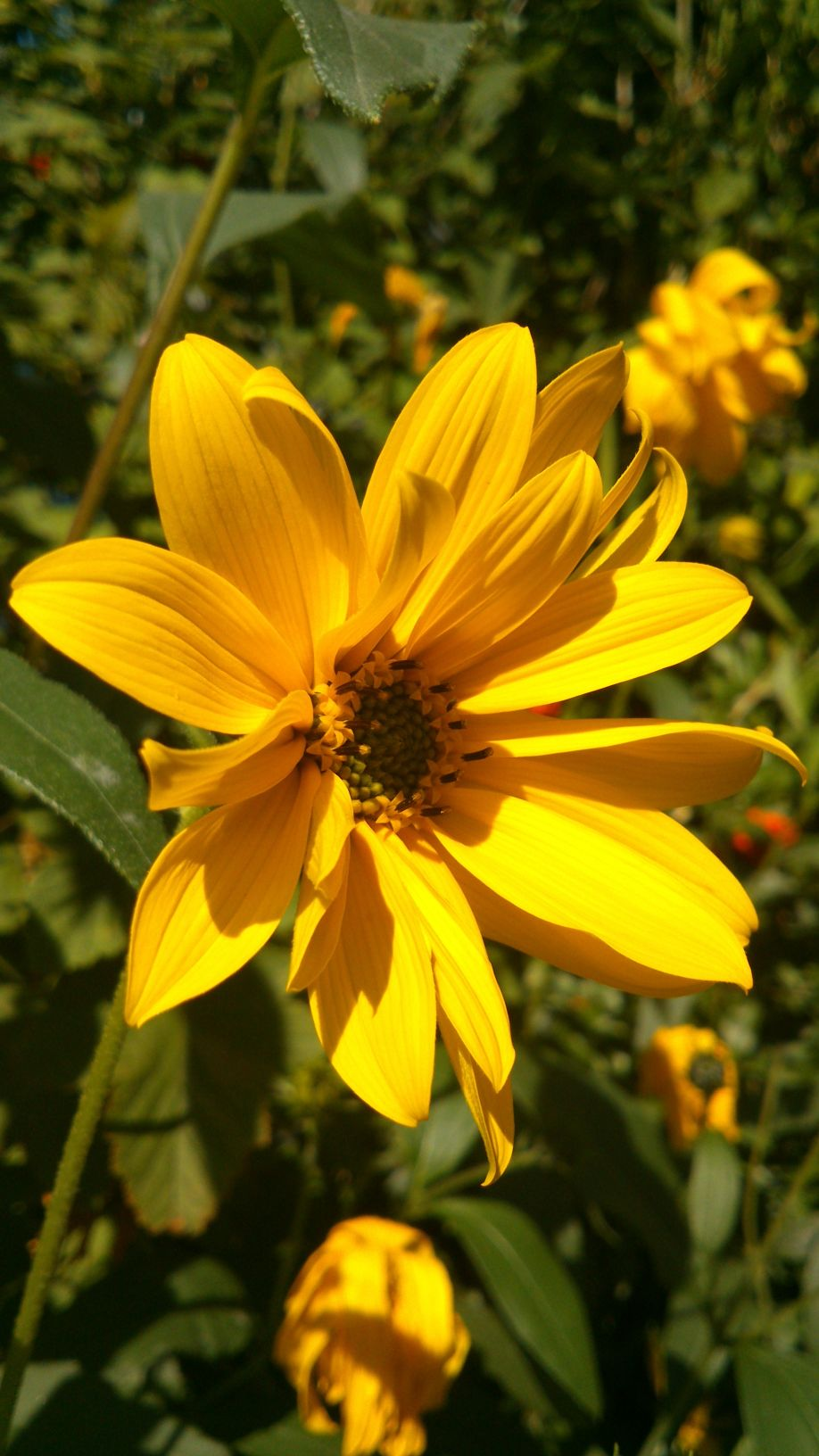 Very beautiful yellow flower diary of dennis very beautiful yellow flower izmirmasajfo