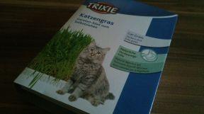 Cat Grass Seed