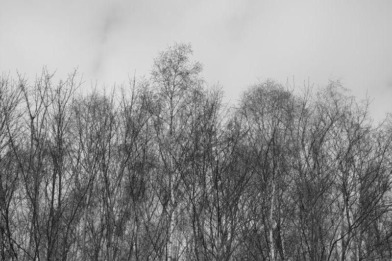 Depressive Photo In Greyscale