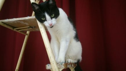 Kitty on the ladder 1