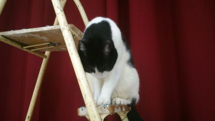 Kitty on the ladder 2