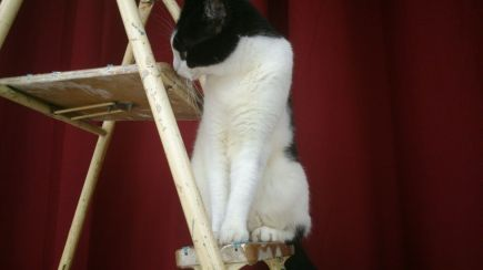 Kitty on the ladder 3