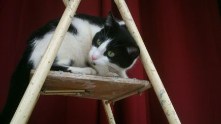 Kitty on the ladder 4