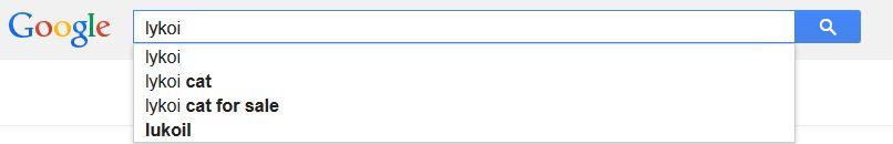 Lykoi Cat Google Autocomplete