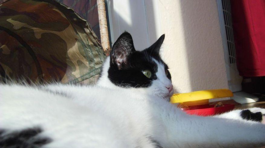 Cat Enjoys First Spring Sunbeams Too