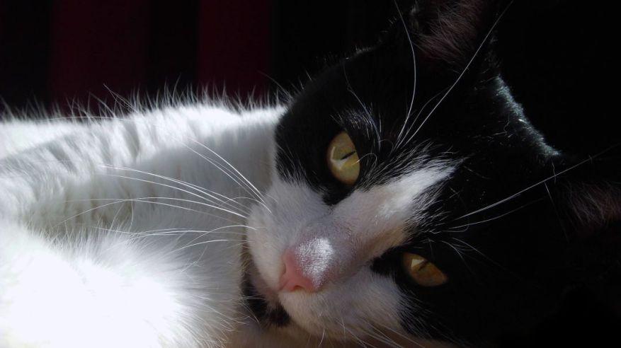 A Photo Of My Cat Shyna