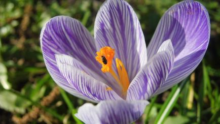 Spring Flower And Bug 3