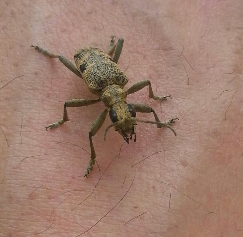 Any Kind Of Insect