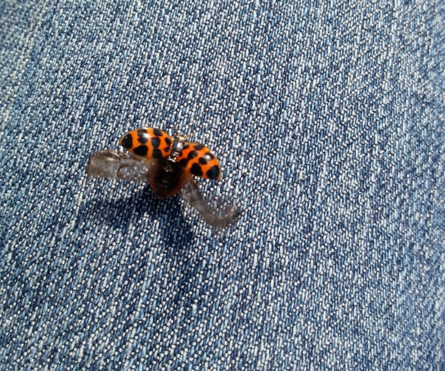 Ladybug Taking Off From A Blue Jeans
