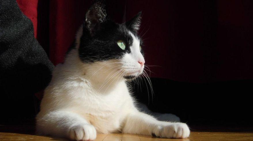 Original Image Of My Cat