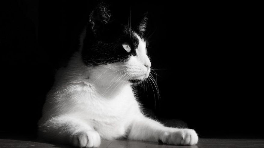 Shyna Black And White