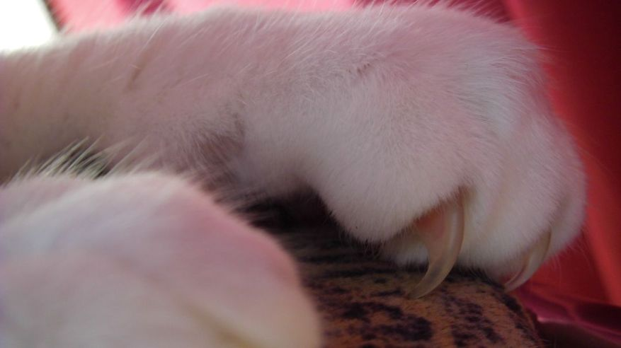White Paws And Claws