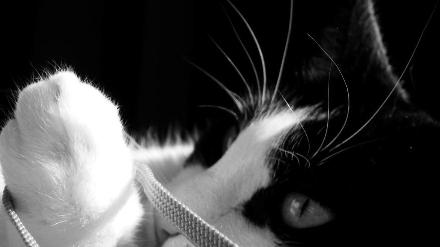 My Cat Black And White
