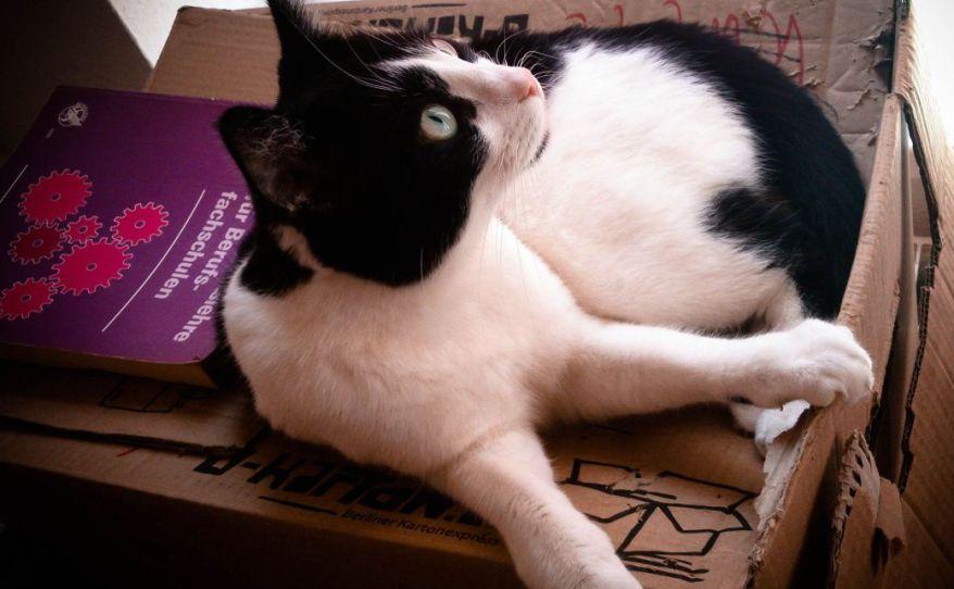 Cat on the Carton