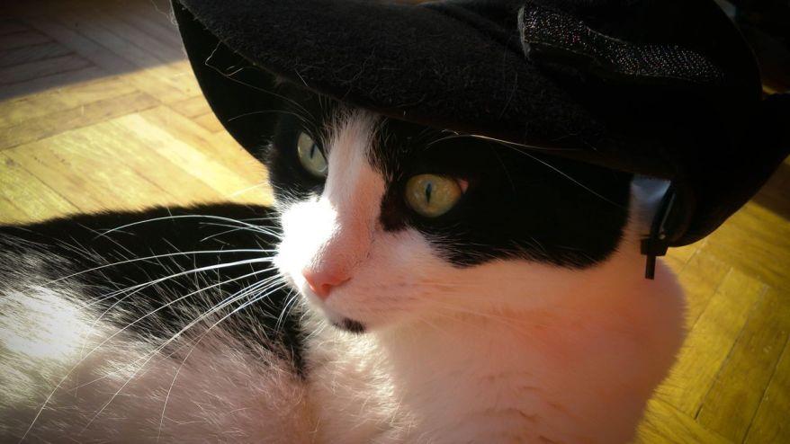 Cat Wears Hat