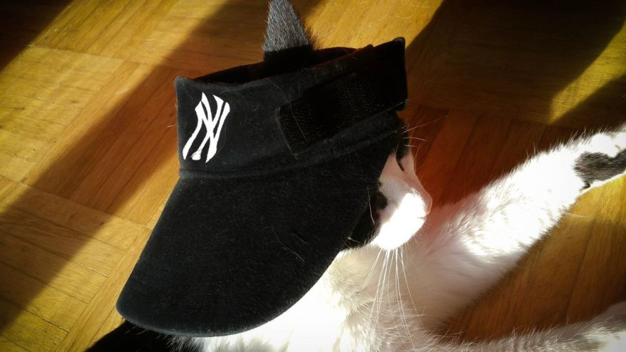 Cat With New York Yankees Cap