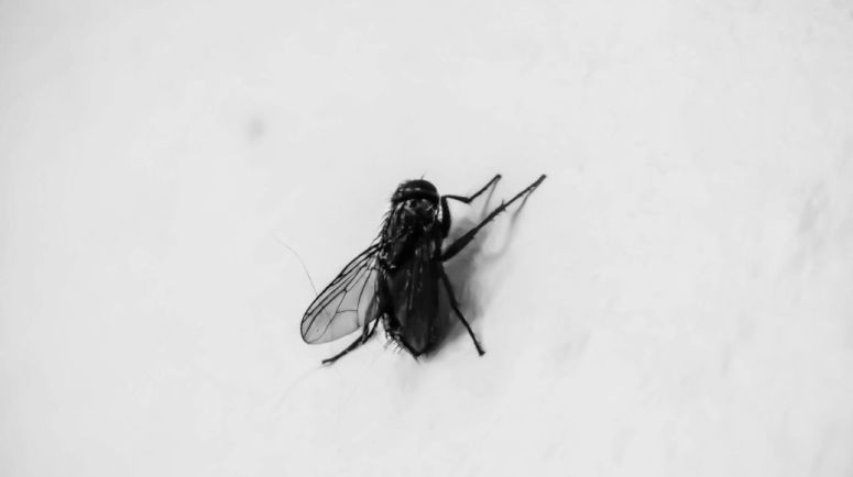 Fly On The Wall – Diary of Dennis