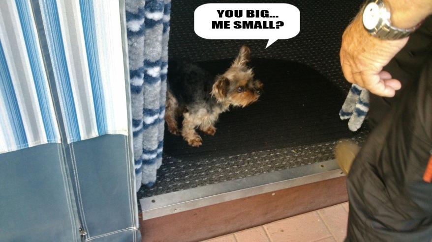 Big And Small Dog Meme