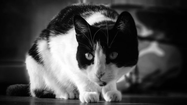 Black And White Cat And Black And White Photo