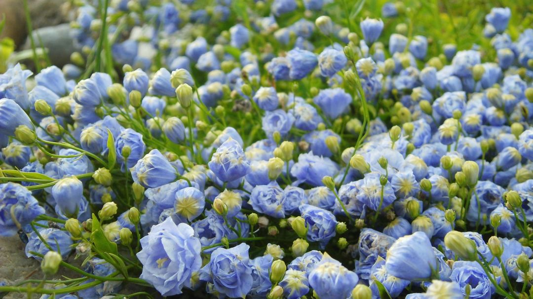 Close-up shot of some beautiful miniature flowers… – Diary of Dennis