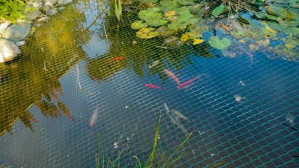 Fishes in the pond 1