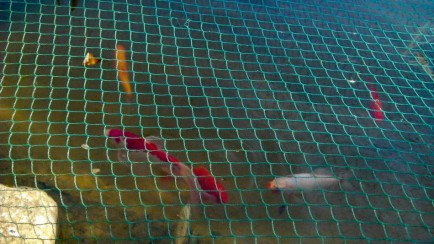 Fishes in the pond 2
