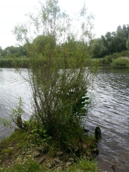 Near the Trave River and the garden