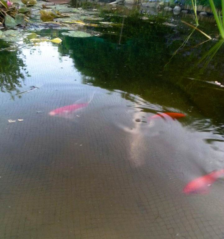 Optical Illusion In The Garden Pond
