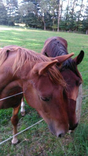 Photo of beautiful horses