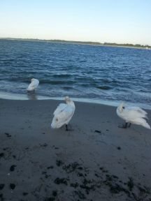 Travemünde Beach 4