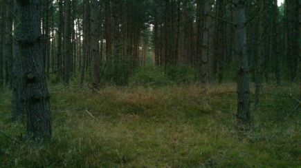 West And East German Border Forest 3
