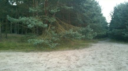 West And East German Border Forest 4