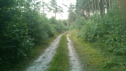 West And East German Border Forest 6