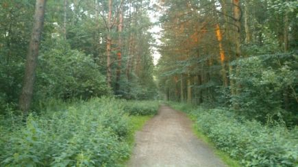West And East German Border Forest 8