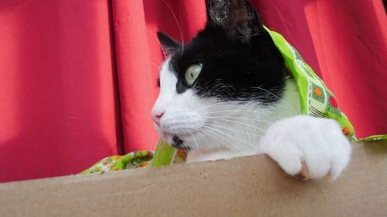 Shyna And The Green Scarf 8