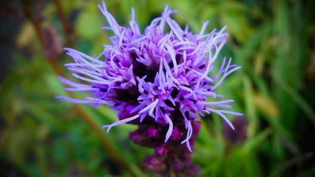 Strange Purple Wild Flower