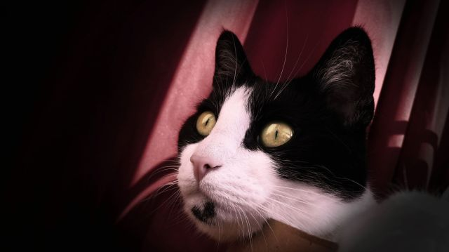 Photoshopped Cat Shyna