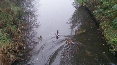 Ducks Enjoy The Foggy Morning Too