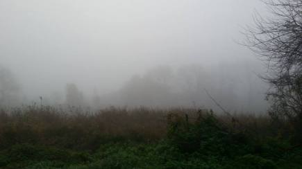 Fog In the Morning Near Trave River