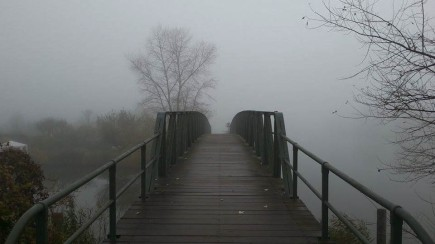 Foggy Morning And Bridge