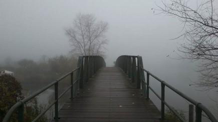 Foggy Morning And Bridge