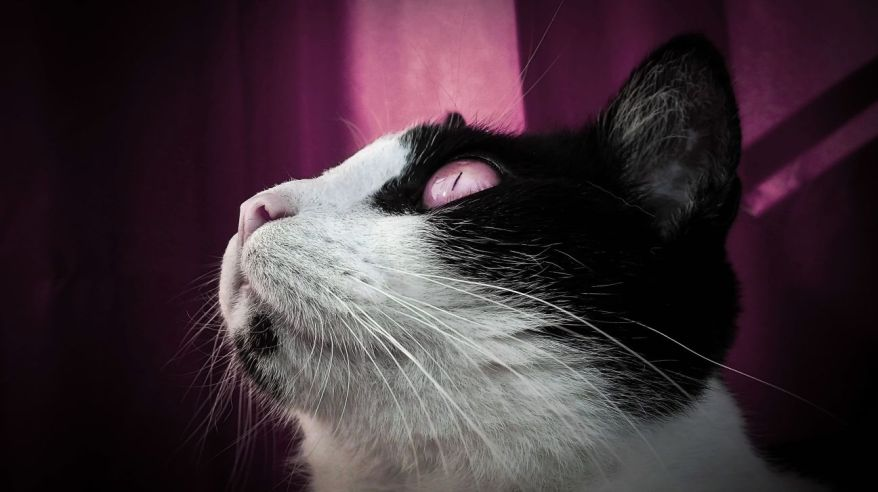 My cat with pink background